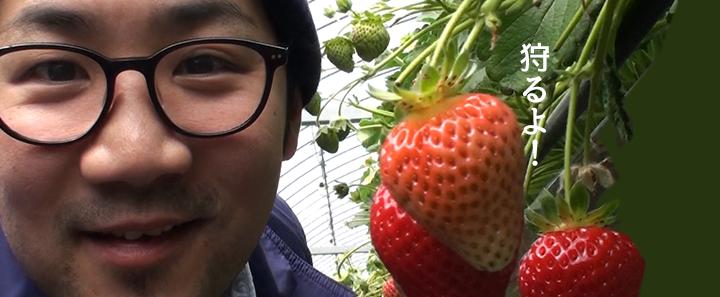 【徳島・いちご狩り】大住いちご園でイチゴを狩りまくる春の一日!徳島市・松茂町